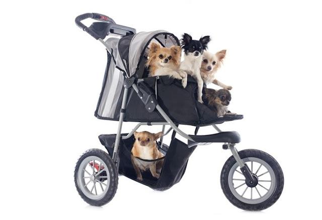spacerówka dla psa