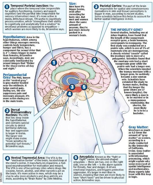 The Male Brain 25