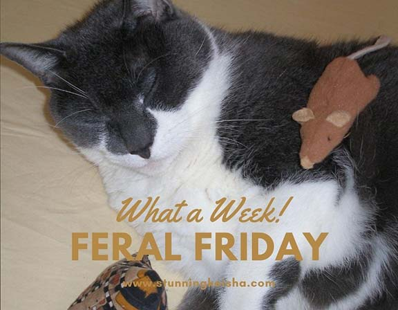 Feral Friday: What a Week