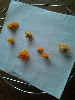 Fleurs de Soucis officinal séchées