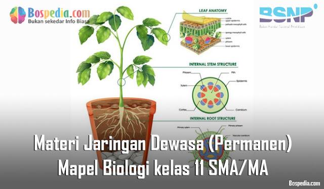 Soal Jaringan Tumbuhan Mapel Biologi Kelas 11 SMA/MA