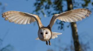 أصوات الطيور جميع أصوات الطيور