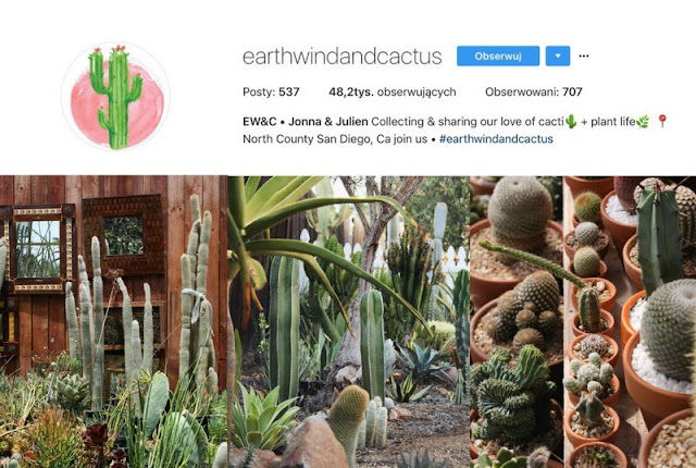 Earthwindandcactus- roślinne inspiracje