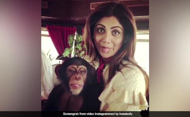शिल्पा शेट्टी ने चिंपाजी को लगाया गले.. बार-बार देखा जा रहा Video