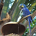 Você sabia que as aves são ótimas dispersoras de sementes?