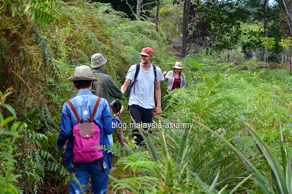 Trekking in Bario
