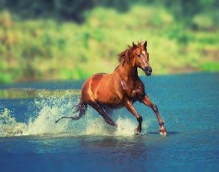 Arti Mimpi Melihat Kuda Mati