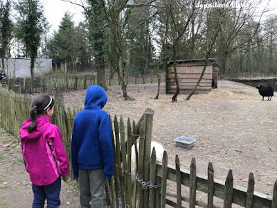 Looking at the sheep at Center Parcs Erperheide