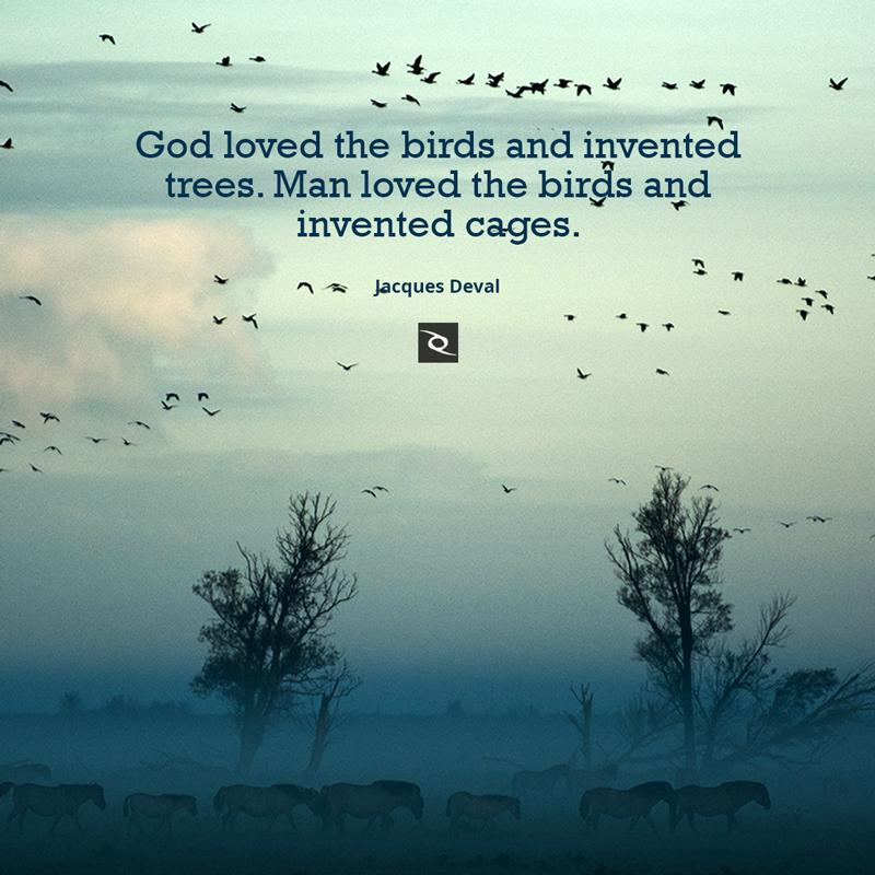 Www Birds Quotes Tree Love Pictures Wwwpicturesbosscom