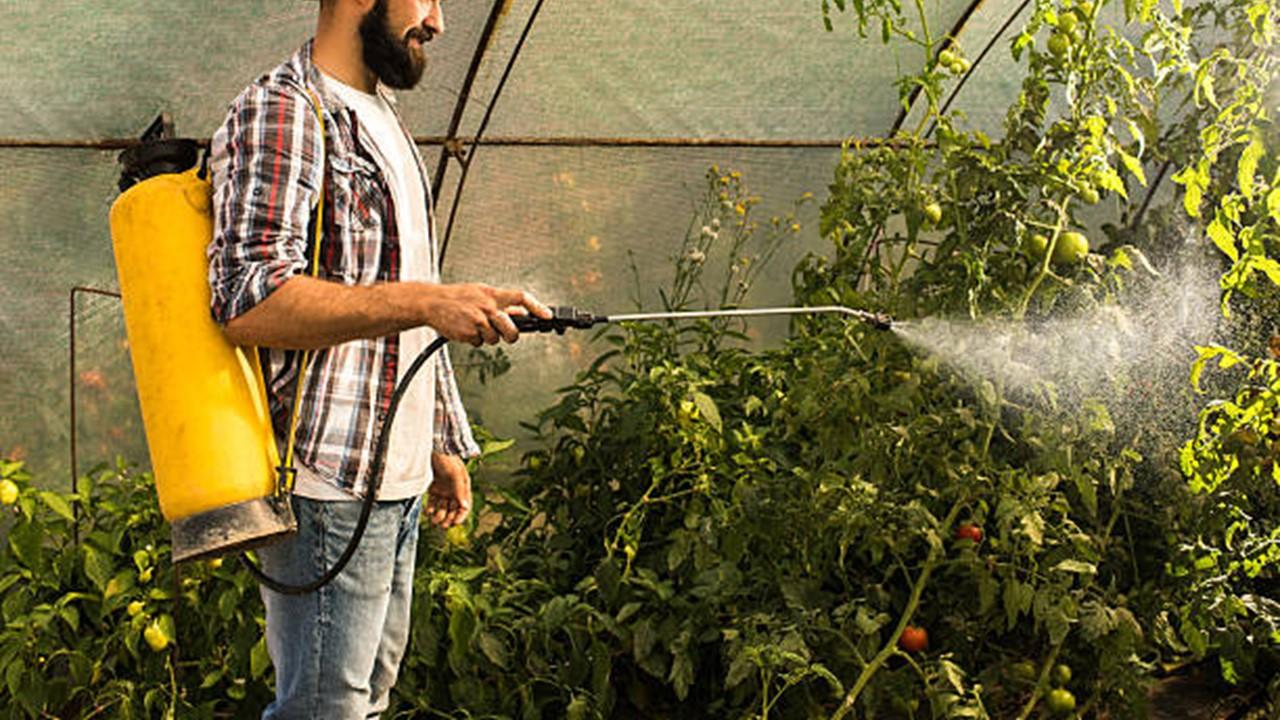 Pupuk Herbafarm Untuk Tomat