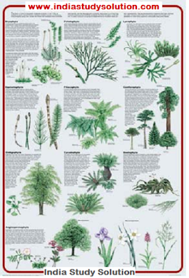 www.indiastudysolution.com Classification of Plants image