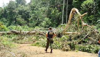 Juíza condena pecuarista a pagar R$ 1,5 milhão e recuperar floresta desmatada