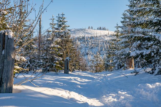 Wanderung auf den Lusen  Winterwandern im Nationalpark Bayerischer Wald 01