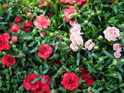 slow life, blog, ogród na balkonie, rośliny