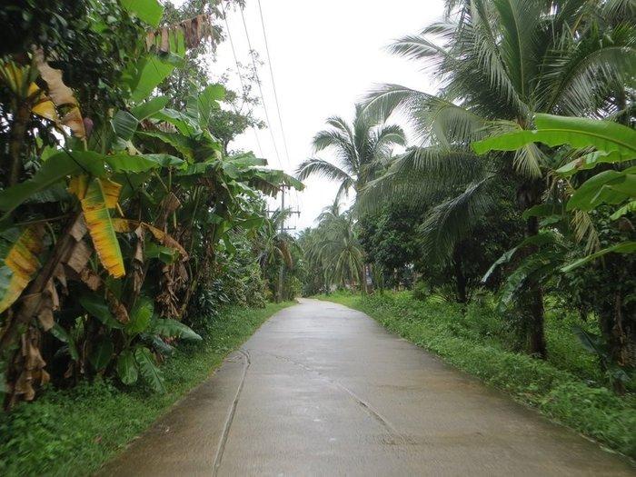Дождик в Таиланде