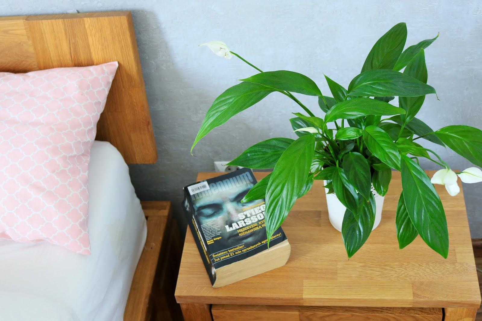 Rośliny Doniczkowe Które Oczyszczają Powietrze W Domu Idealne Dla