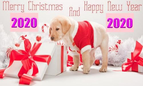 Happy New Year Wishes In Hindi, Happy New Year Sms In Hindi