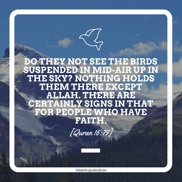 Do they not see the birds suspended in mid-air up in the sky? Nothing holds them there except Allah. There are certainly signs in that for people who have faith. -Quran [16:79]
