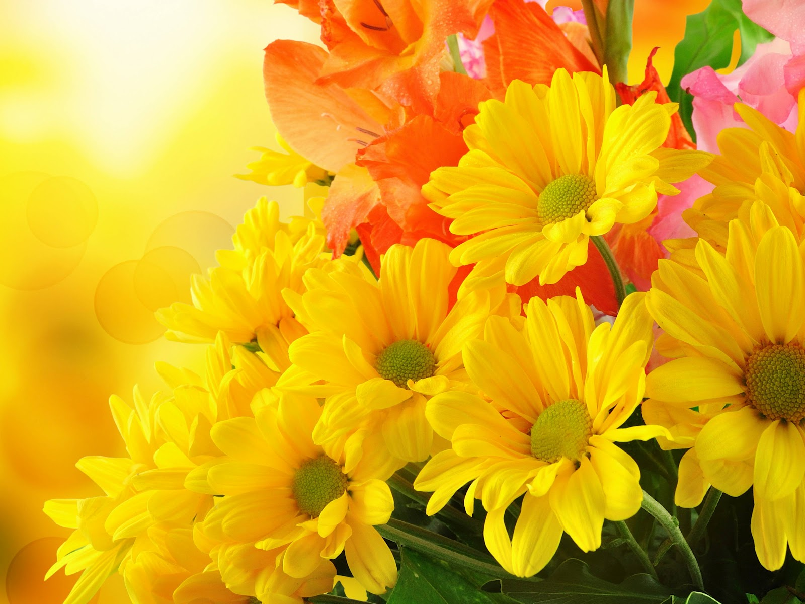 Flores Hermosas Flores Silvestres Fondos De Pantalla Gratis: Taringa