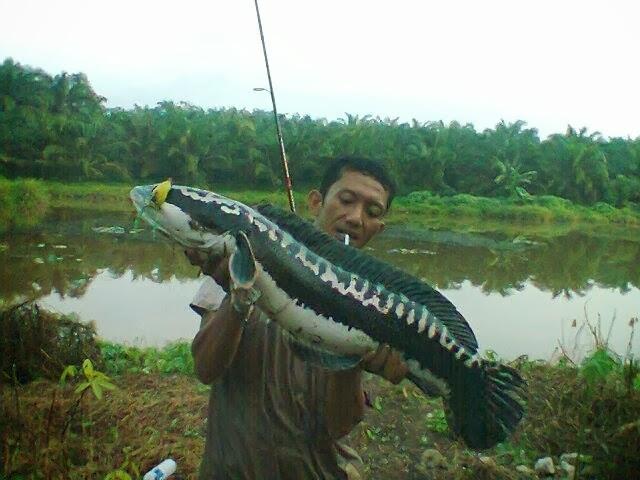 Indonesian Fish Strike