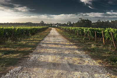 The Long House has access to great vineyards