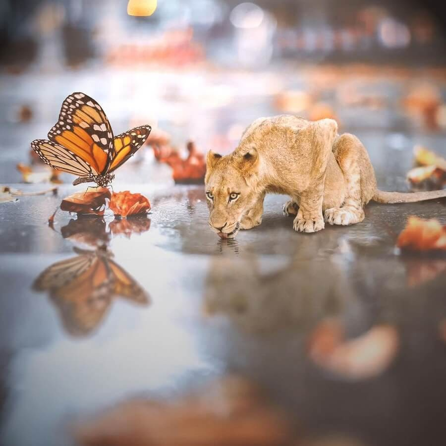 01-Lion-and-butterfly-Marcio-Sa-www-designstack-co