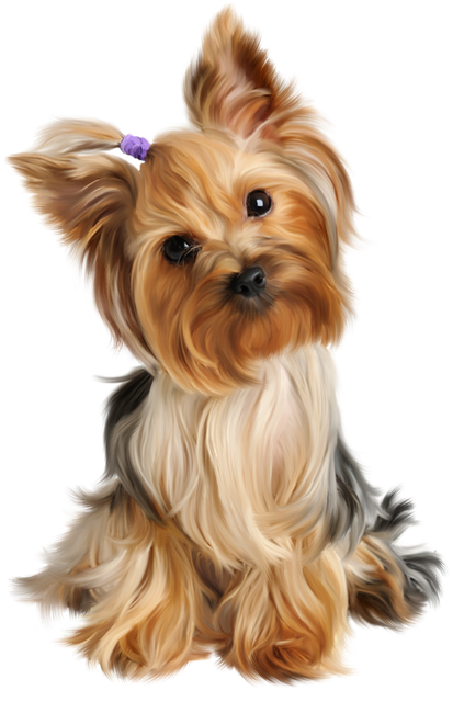 Yorkshire Terrier Puppy Siberian Husky Dog grooming Pet, puppy, animals, carnivoran, toy Dog png free png
