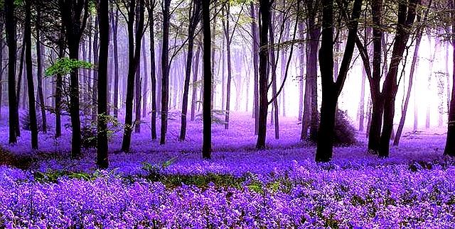 Hallerbos, Hutan Terindah di Belgia