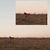 Lobo-guará é fotografado em nossa cidade