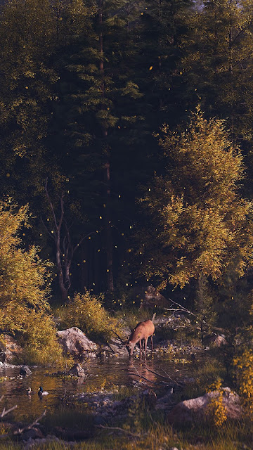 Free solitary deer wallpaper in the autumn forest