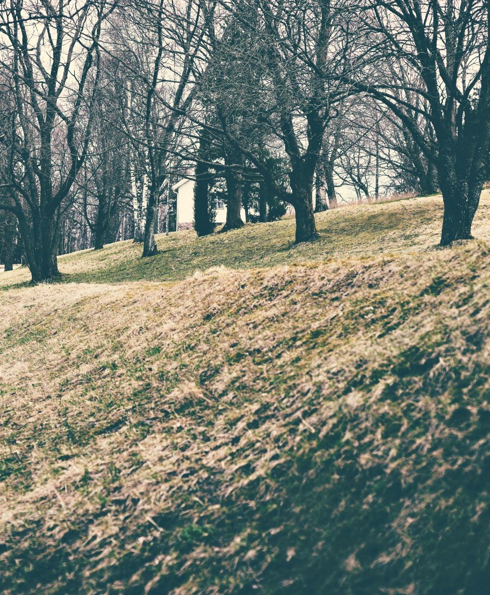 luonto, nature, Espoo, Finland, kevät, spring, Visualaddict, kukka, trees, naturephotography, outdoors, luontovalokuva, valokuvaaja, Frida Steiner