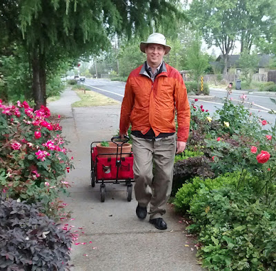 Man in orange jacket and wide-brimmed off-white hat pulling red wagon with flower pot up residential street bordered by bushes with red flowers and, behind him, trees