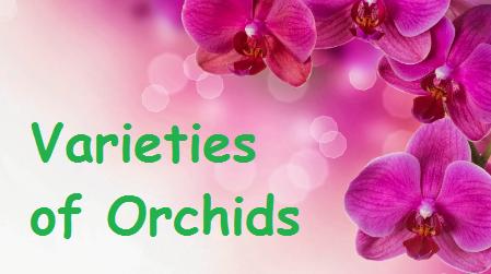 Varieties of Orchid flowers