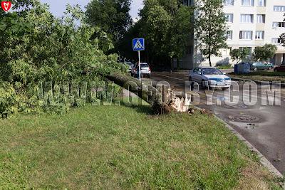 Минск. Дерево поломанное под корень ураганом 13 июля