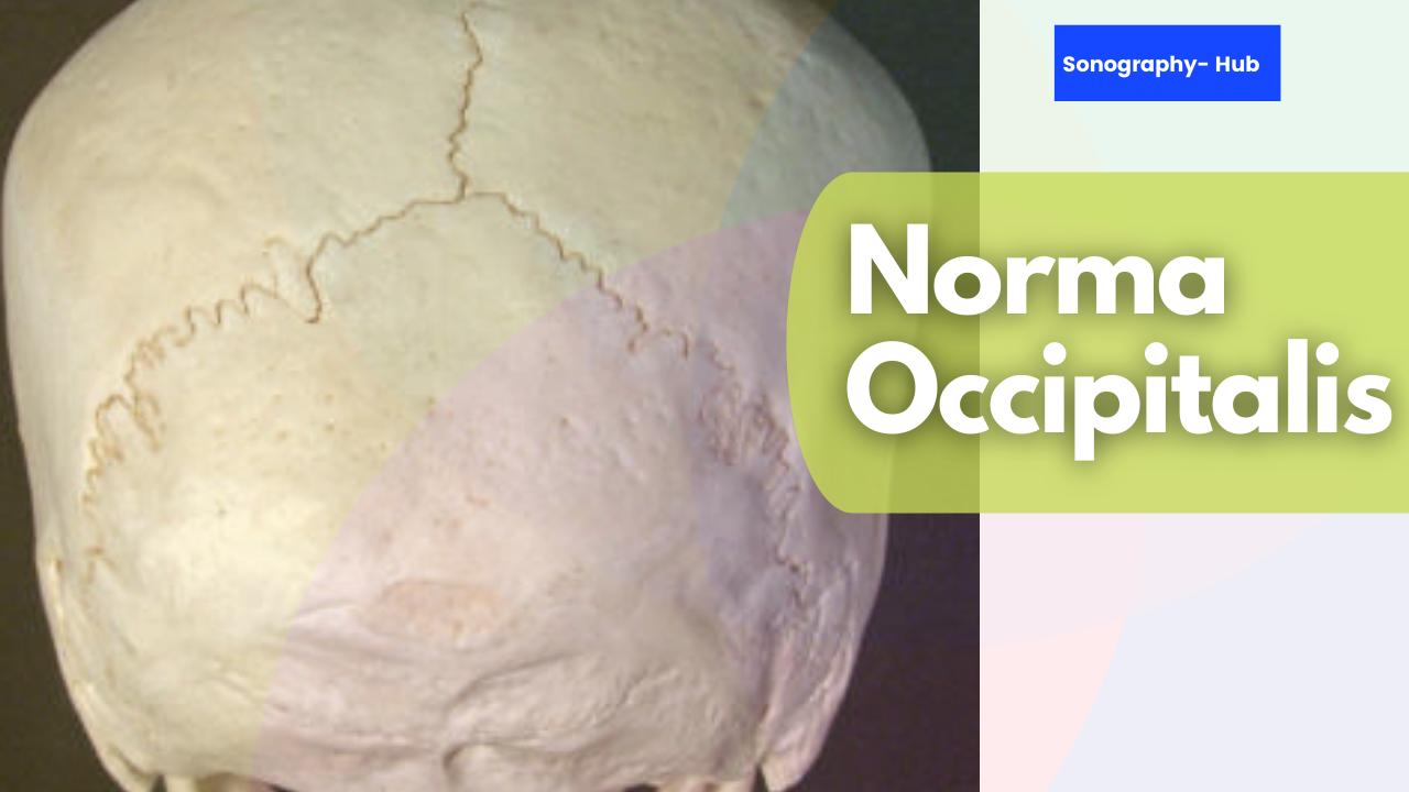 Norma Occipitalis- Skull Exterior