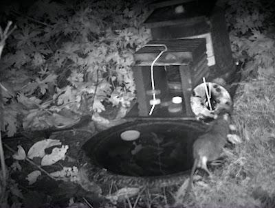 rat hedgehog feeder