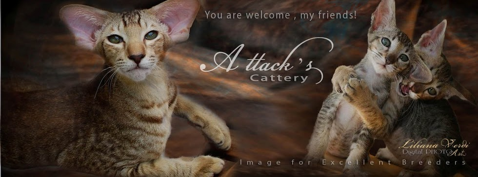 Attacks Cattery