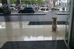 Stray Dog Never Gives Up On Waiting For Flight Attendant Outside Hotel, And She Finally Adopts Him