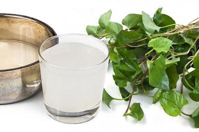 Bài thuốc điều trị viêm họng, ho từ rau diếp cá kết hợp cùng nước vo gạo