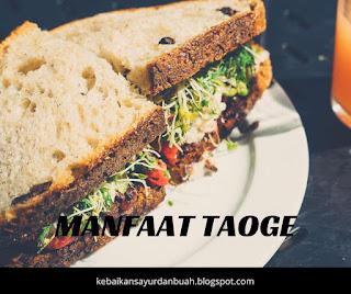 manfaat taoge atau kecambah untuk kesehatan