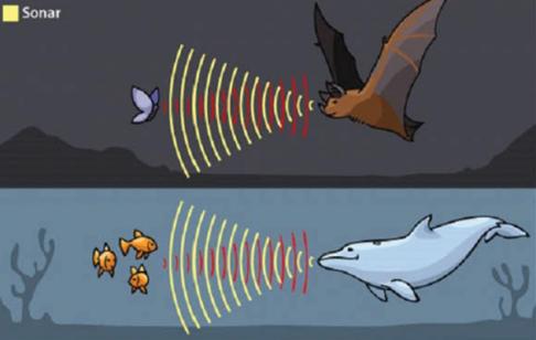 Makalah Teori Evolusi Mata Kelelawar