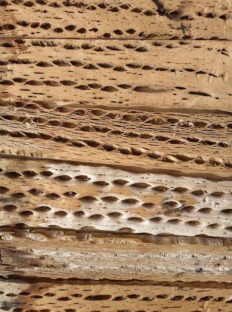 Textura maderas con huecos