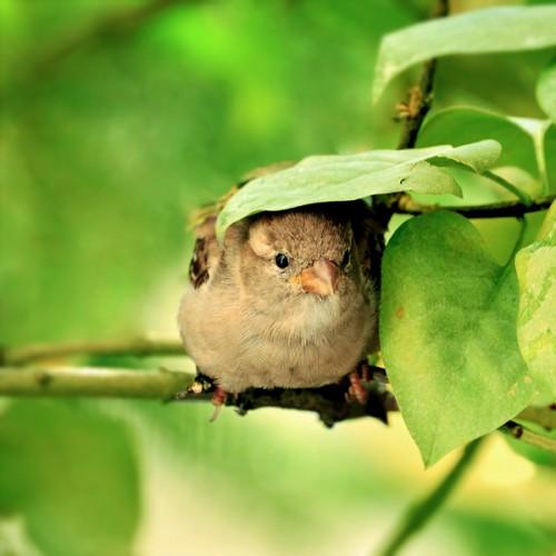 صور طيور جميلة , خلفيات طيور حب  HD