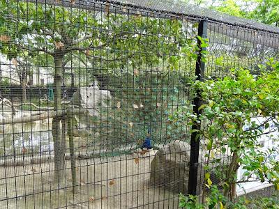 神戸市立王子動物園 クジャク