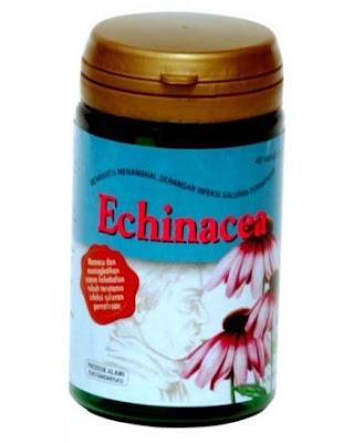 Harga Echinacea Sidomuncul Terbaru 2017