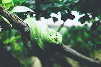 Green Snake - Photo by Julia Joppien on Unsplash