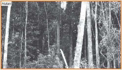 Pelestarian lingkungan hidup hutan