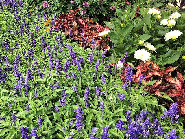 Blau blühende Sommerblumen