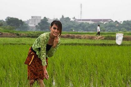 7 Varietas Padi Ciherang Yang Banyak Diburu oleh Petani