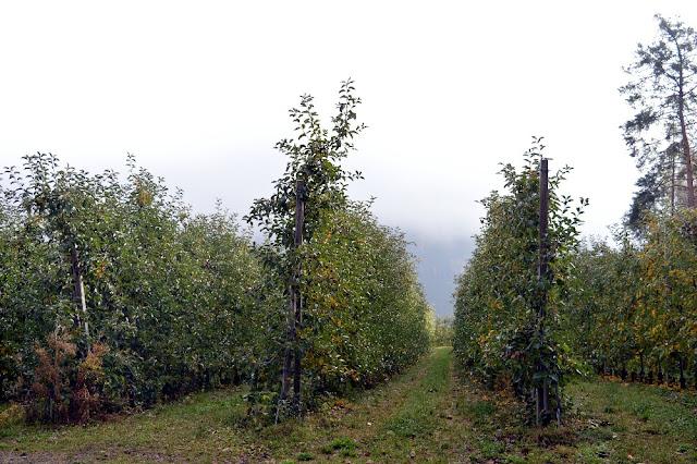 sentiero della mela naz sciaves